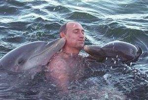 Poetin dolfijnen